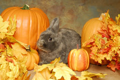 Bunny in the Pumkins Stock Images