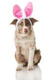 Bunny puppy Royalty Free Stock Photos