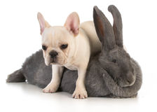 Bunny and puppy Royalty Free Stock Image