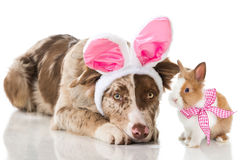 Bunny and puppy Stock Photography