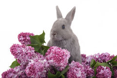 Bunny among the purple lilac Royalty Free Stock Photo