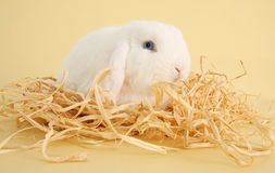 Bunny rabbit. White bunny rabbit surrounded by straw. Also available with Easter eggs Royalty Free Stock Photography