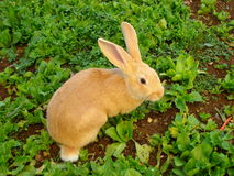 Bunny rabbit. Sitting outside in garden Stock Images