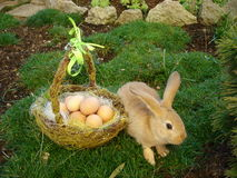 Bunny rabbit. With basket of eggs Stock Image