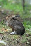 Bunny Rabbit Stockbild