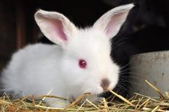 Bunny Rabbit Stock Foto's