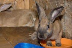 Bunny Rabbit Immagine Stock
