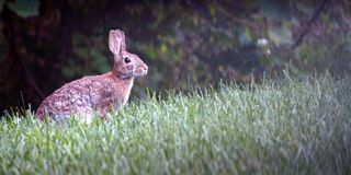 Bunny Rabbit-alarm in de weide stock afbeelding