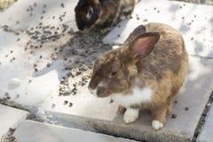 Bunny rabbit on animal farm Royalty Free Stock Photos