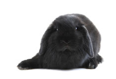 Bunny rabbit Stock Images