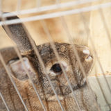 Bunny rabbit in a cage Stock Photo