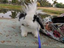 Bunny Rabbit with crazy hair stock photos