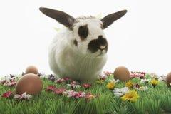 Bunny Rabbit And Easter Eggs auf künstlicher Wiese Stockfoto
