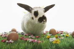 Bunny Rabbit And Easter Eggs sul prato artificiale Fotografia Stock