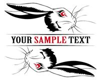 Bunny rabbit face Royalty Free Stock Image