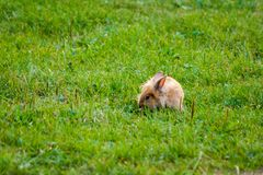 Bunny rabbit on the grass stock images