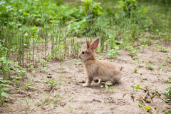 Bunny rabbit on the grass Royalty Free Stock Image