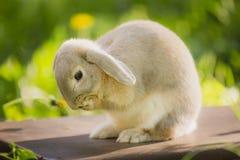 Bunny rabbit on the grass. Close up. Stock Photos