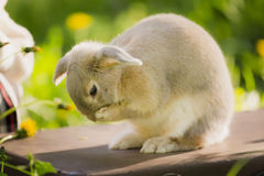 Bunny rabbit on the grass. Close up. Royalty Free Stock Photography