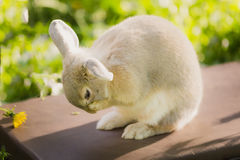 Bunny rabbit on the grass. Close up. Royalty Free Stock Photo
