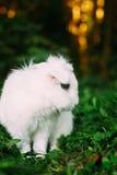 Bunny Rabbit On Green Grass engraçado branco Fotos de Stock
