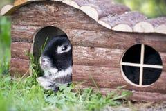 Bunny rabbit lying on summer grass stock photography