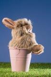 Bunny rabbit in pink bucket Stock Image