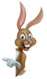 Bunny Rabbit Pointing Royalty Free Stock Photography