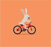 Bunny rabbit riding bike Stock Images