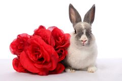 Bunny Rabbit and Roses. Cute pet bunny rabbit and red roses Royalty Free Stock Photography