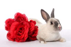 Bunny Rabbit and Roses Royalty Free Stock Photography