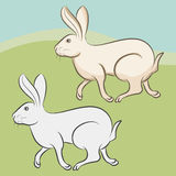 Bunny - rabbit Royalty Free Stock Images