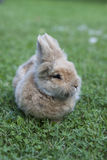 Bunny Royalty Free Stock Photo