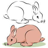 Bunny Rabbit Sniffing Stock Images