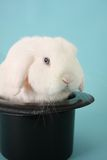 Bunny rabbit in a top hat Stock Image