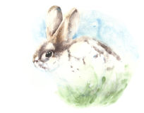 Bunny rabbit watercolor painting illustration handmade isolated on white background greeting card Royalty Free Stock Photo