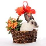 Bunny Rabbit in Wicker Basket Stock Photo
