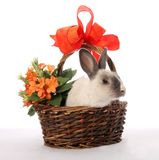 Bunny Rabbit in Wicker Basket Royalty Free Stock Photo