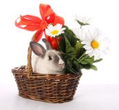 Bunny Rabbit in Wicker Basket Royalty Free Stock Photography