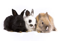 Bunny Rabbits. Adorable baby bunny rabbits on white background stock image