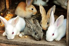 Bunny Rabbits family Royalty Free Stock Images