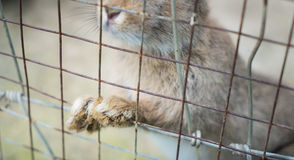 Bunny and rabbits locked up in wire fence. Royalty Free Stock Photo