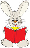 Bunny reading the red book Stock Photography