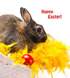 Bunny and red egg. Close-up beige bunny and red egg on yellow fur boa in straw basket on white background royalty free stock image