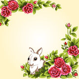 Bunny and roses Stock Photography