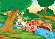 A bunny running across the bridge Royalty Free Stock Photos