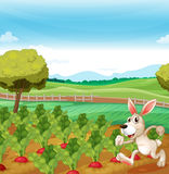 A bunny running in the farm Royalty Free Stock Photography