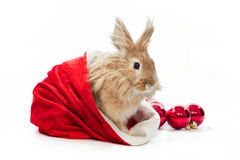 Bunny in santa hat Royalty Free Stock Photo