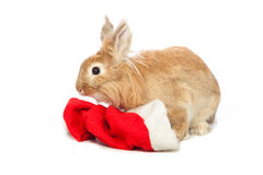 Bunny and santa hat Stock Photography
