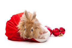 Bunny in santa hat Royalty Free Stock Photography